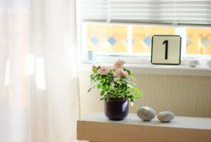 Zimmerpflanzen Und Feng Shui | Feng-shui-einrichten.de Blumen Und Zimmerpflanzen Helfen Den Stress Abzubauen