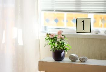 feng shui zimmerpflanzen feng shui bilder erfahren sie die bedeutung der typischen feng shui. Black Bedroom Furniture Sets. Home Design Ideas