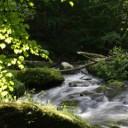 Der Fluss des Qi