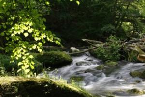 Der Fluss des Qi (Foto: Frank Kliem, Fotolia.com)